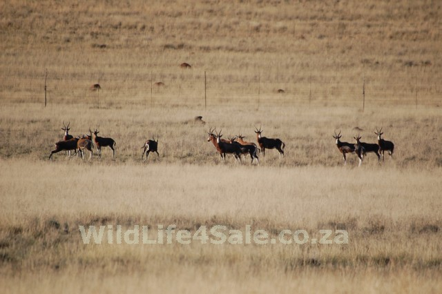WildLife4Sale (129)