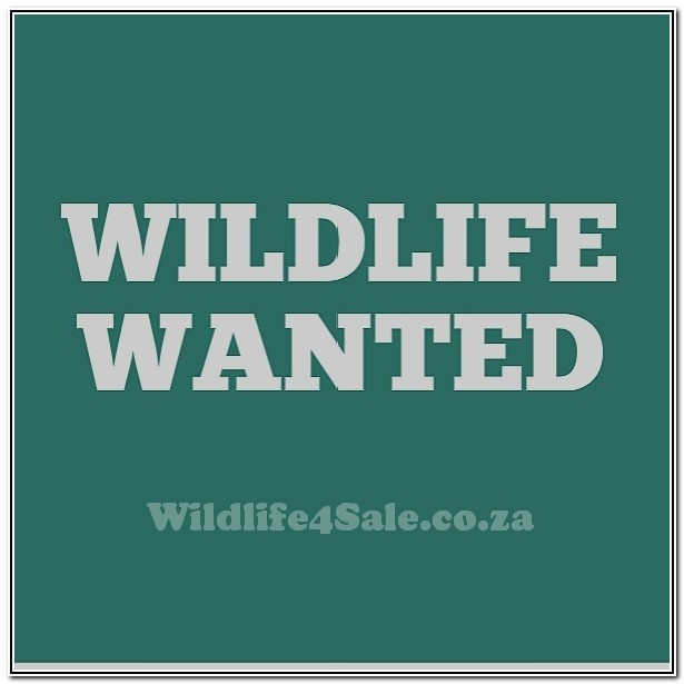 Wildlife Wanted - Opsoek na Europese Bosvarke - Pretoria