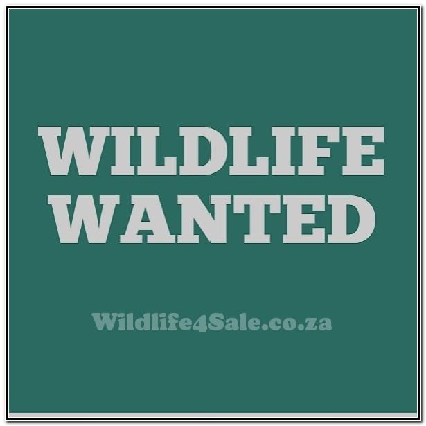 Wildlife Wanted - Opsoek na Mak Blesbokkies