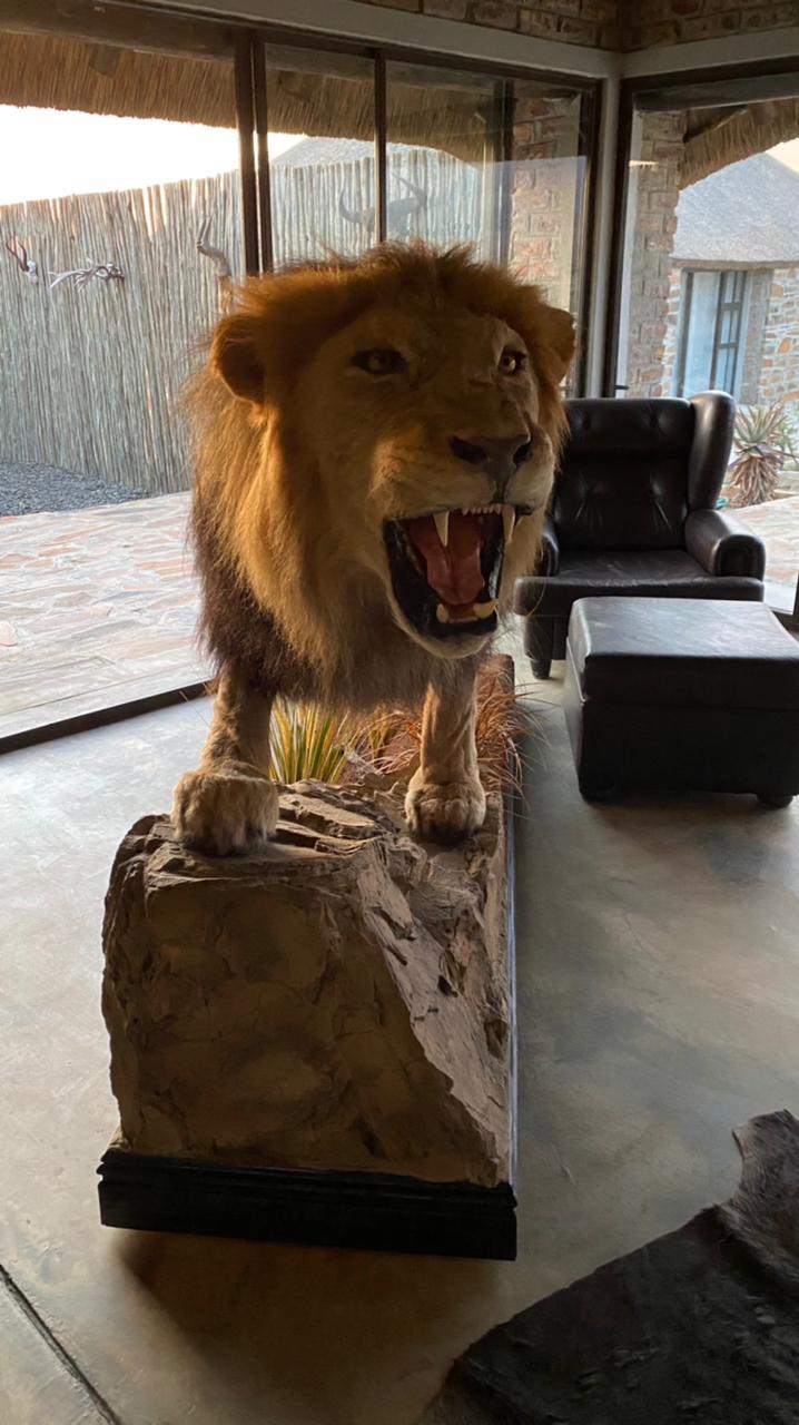 Full Lion Mount for sale